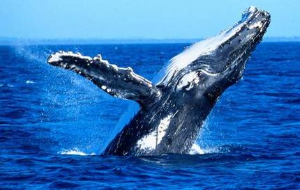 top-spots-whale-watching IMG