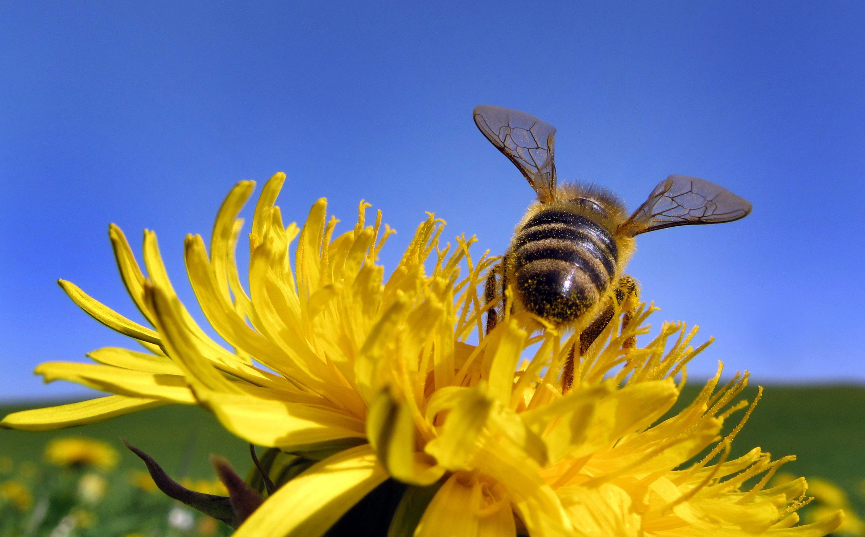 saving-bees-policy-change-0 IMG