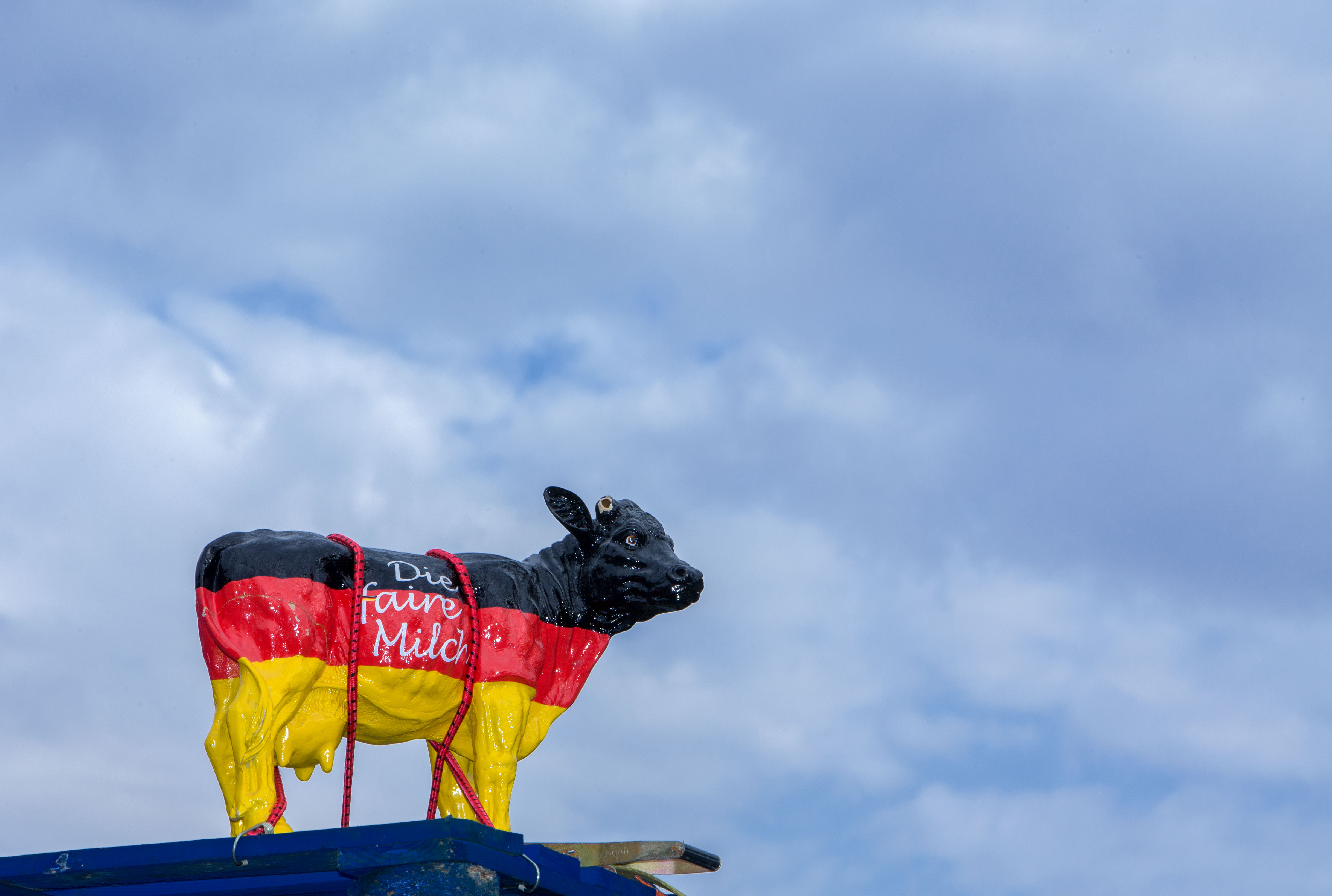 A cow figure in German national colors stands during a demonstration in the city centre of Schwerin, Germany, 24 August 2015. Diary farmers started their protest tour against the milk price decline in northern Germany and will finish in Munich, where they will present a new concept to handle the milk price crisis 1 September 2015.