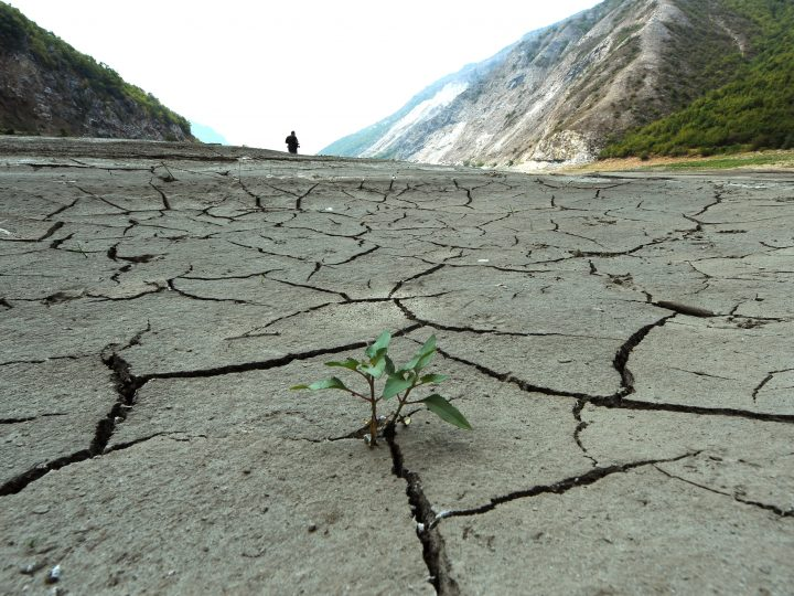 epa03380571 A photograph made available on 02 September 2012 showing a small plant growing through a crack of the dried bed of the Debar lake, after it dropped some 10 meters from it's normal level near the western city of Debar,The Former Yugoslav Republic of Macedonia on 01 September 2012. Reports state that the western Balkan country's were hit by a major heat wave, with temperatures rising to 43 degrees Celsius. The high temperatures caused hundreds of fires in which 6500 hectare of forest were destroyed. The drought that has been present for more than 12 months has inflicted serious damage to Macedonian agriculture and stock breeders. The poor results in agriculture production will force Macedonia to import 60 per cent of it's needs for wheat which will causes serious economical losses.  EPA/GEORGI LICOVSKI