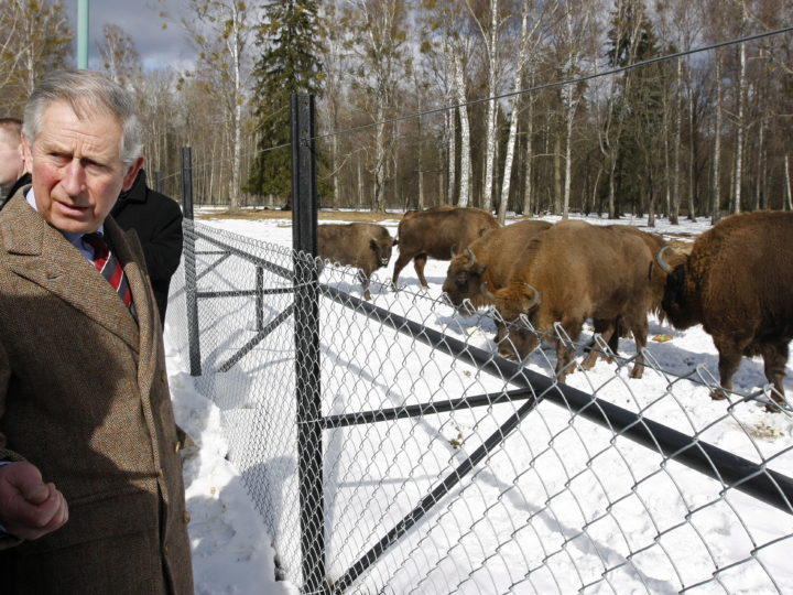 epa02081565   Britain's Prince Charles (EXTREME LEFT) viewing  European bisons, the biggest European land mammal and the symbol of the Bialowieza National Park, while visiting the European Bison Show Reserve in Bialowieza, Poland, 16 March 2010. Camilla, the Duchess of Cornwall is not accompanying her husband Charles, on his trip to Eastern Poland because of a recurring spinal complaint.  EPA/Artur Reszko POLAND OUT